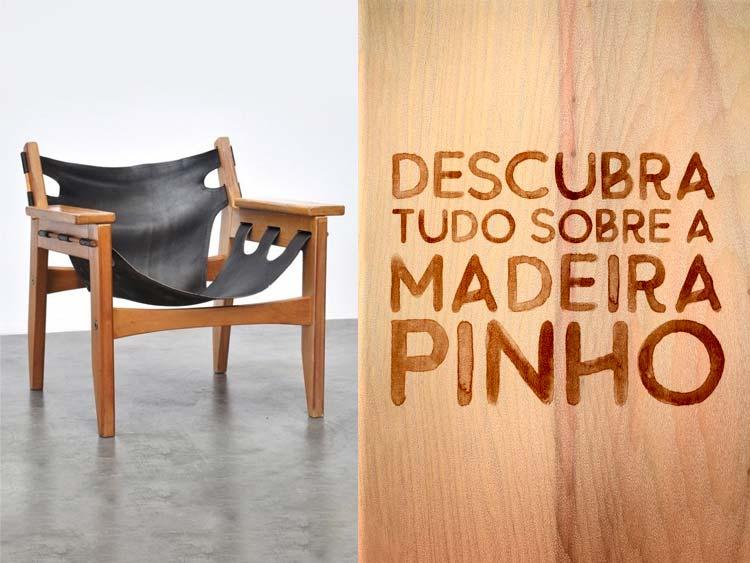 Saiba tudo o que você precisa saber para apostar na madeira pinho, o pinheiro-do-Paraná.