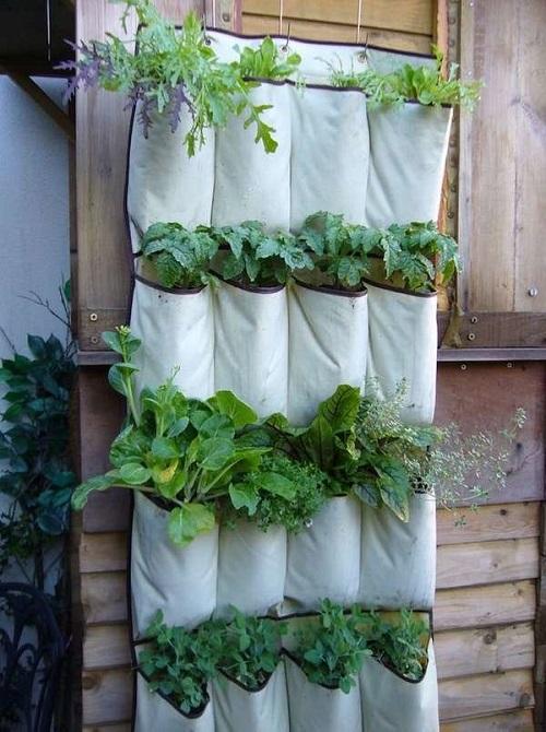 Horta criada em bolsos de organizador.