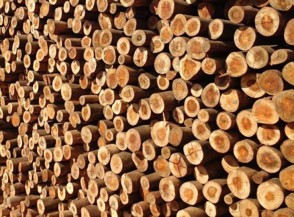 O eucalipto tratado é uma opção mais barata de madeira para telhado.